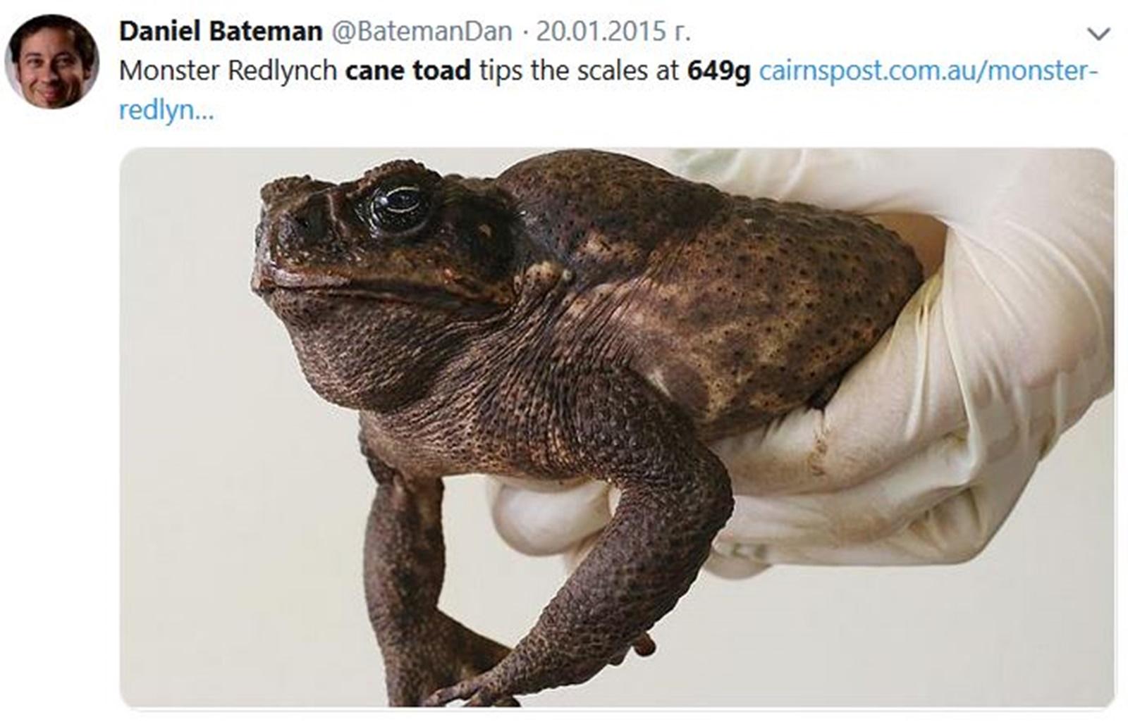 Тръстикова крастава жаба<br /> Не може да се каже, че тя притежава чара на Патрик-Вомбатът, но пък със сигурност впечатлява с размерите си. През 2007 г. тръстикова жаба с размерите на малко куче е открита в Дарвин, Австралия. Теглото ѝ е 649 грама и с няколко сантиметра се проваля в опита си да бъде регистрирана като най-голямата жаба.