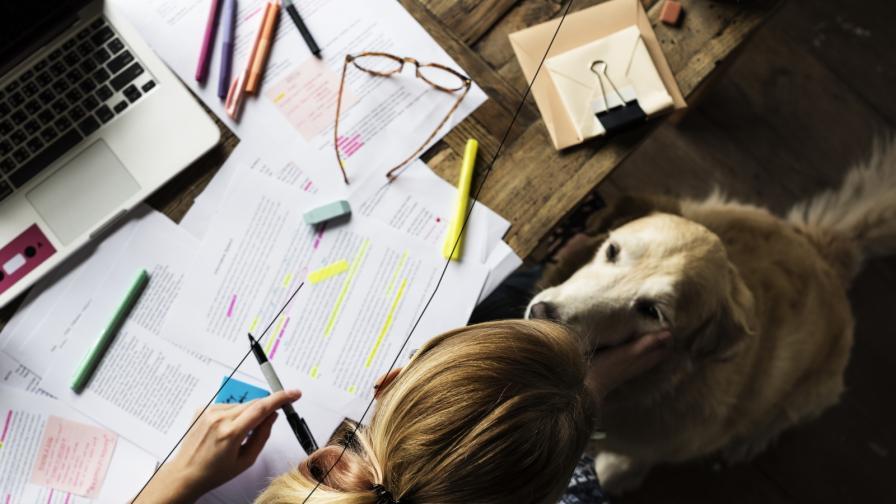 Университет даде почетна диплома на куче-асистент