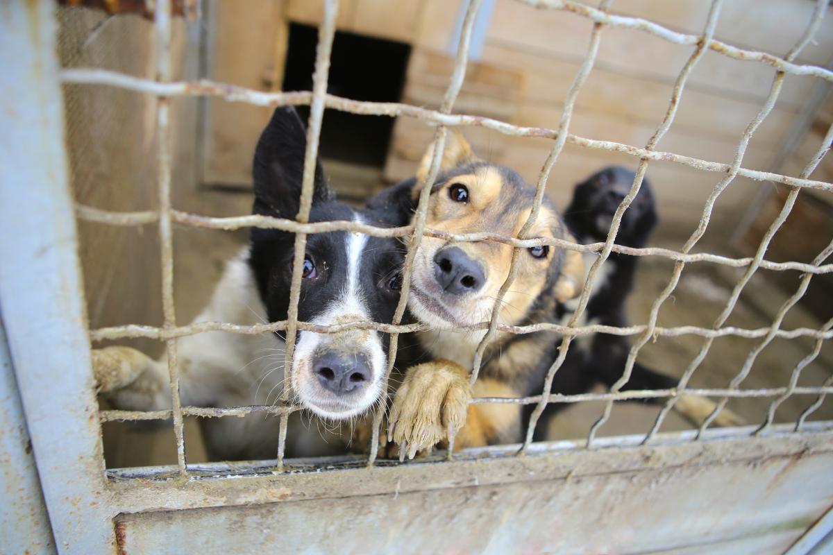 Посетете приют за бездомни и изоставени животни. Не е задължително да осиновявате - може да занесете храна или нещо друго необходимо.