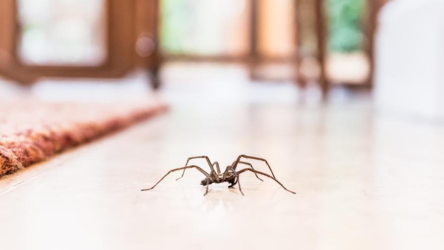 Паяк изяде прилеп (СНИМКИ)