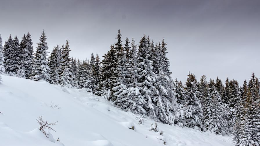 <p>Подновяват издирването на изчезналия сноубордист</p>
