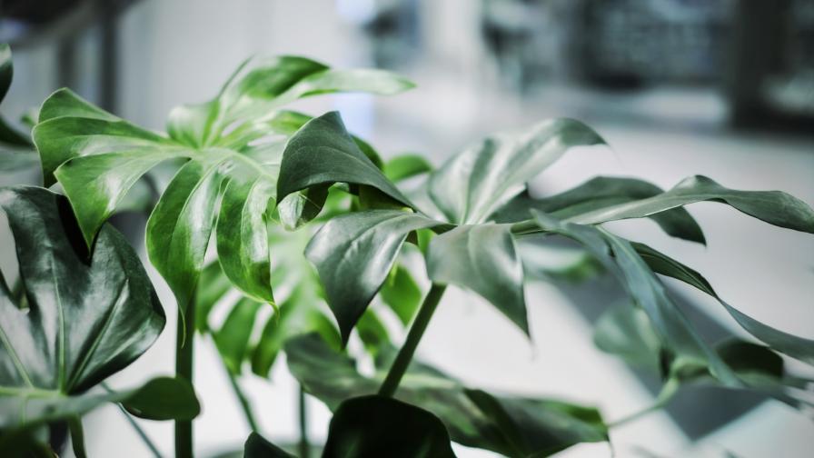 <p>Как цветята <strong>могат да ни бъдат от полза</strong> в офиса</p>