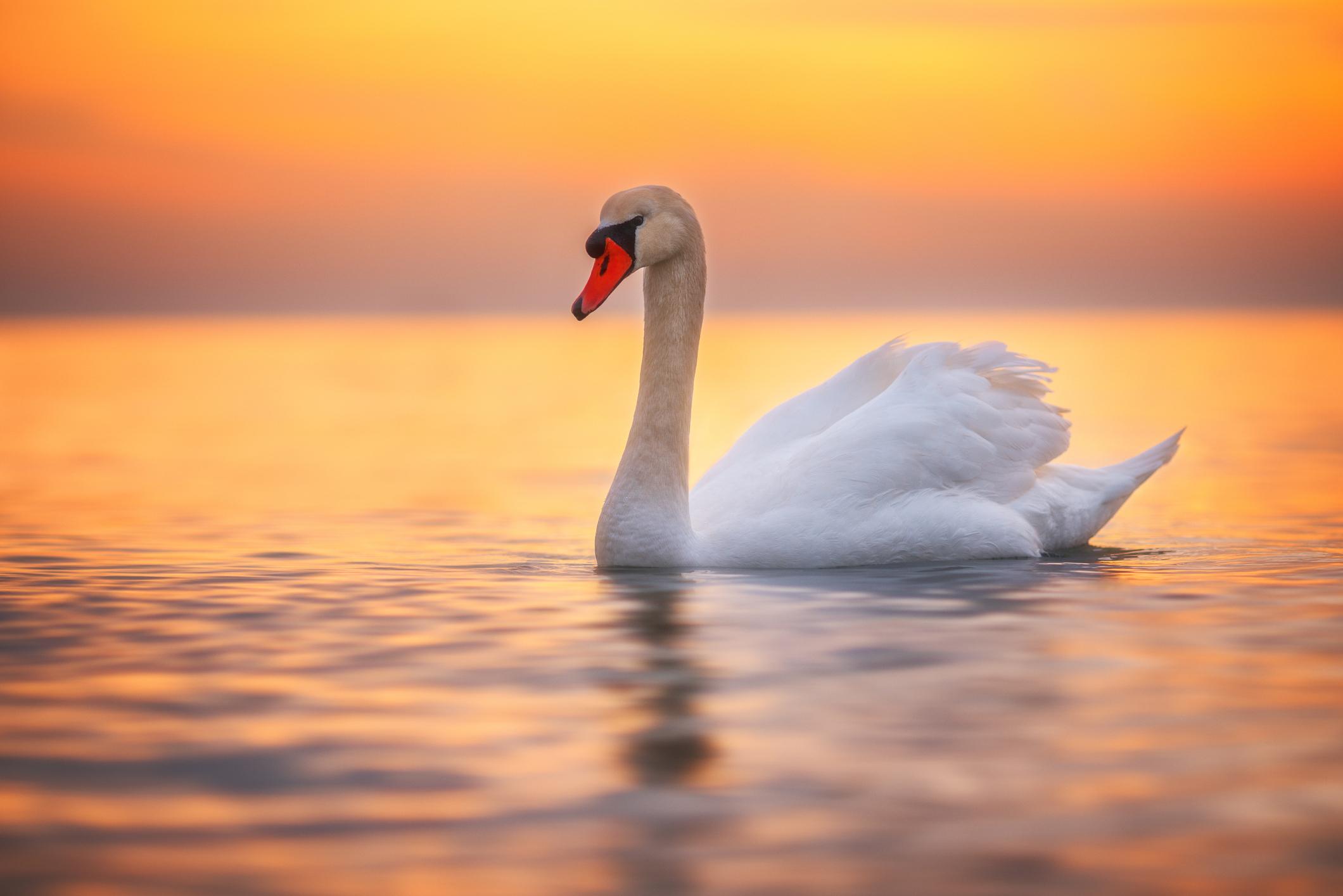 Лебед: 1-31 октомври<br /> Хората, родени през октомври, са чаровни, с мили обноски и голяма доза благоразумие. Трудно могат да ги изкарат от равновесие.