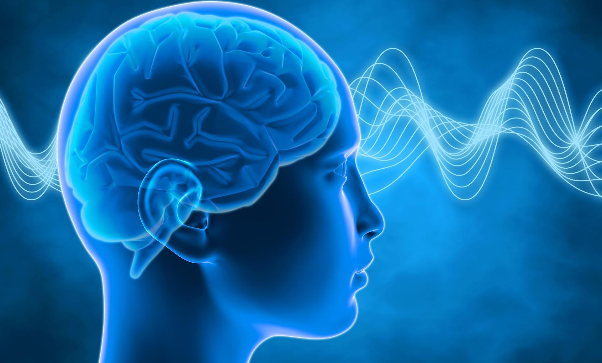 Въпреки че мъжкият мозък е с 9% по-голям от женския, броят на мозъчните клетки и при двата пола е еднакъв. Заради повишеното производство на естроген през пубертета мозъкът на момичетата съзрява с около две години по-рано от този на момчетата.