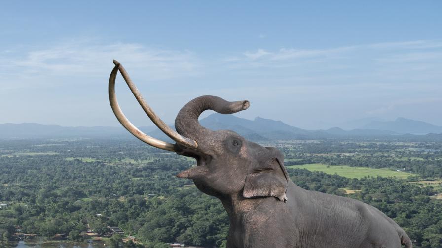 <p>Умря кралицата на слоновете с бивни до земята</p>