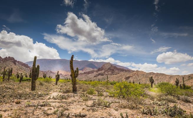 Дете оцеля 24 часа само́ в пустинята в Аржентина
