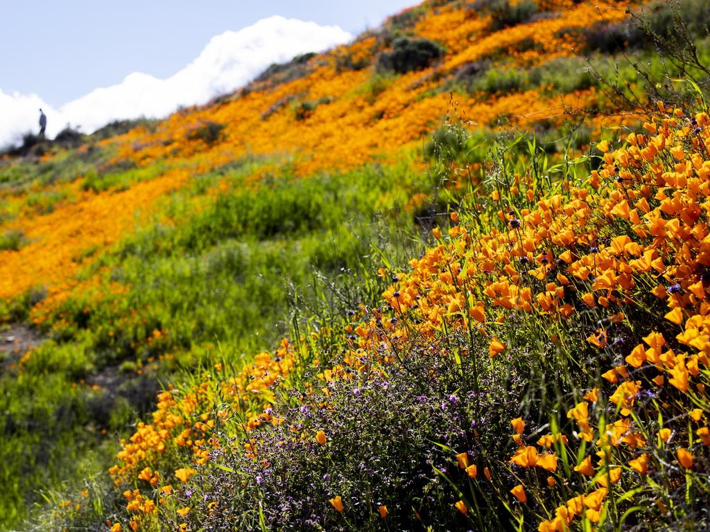 Пустинята се намира в югоизточна Калифорния и представлява най-големият парк на щата.