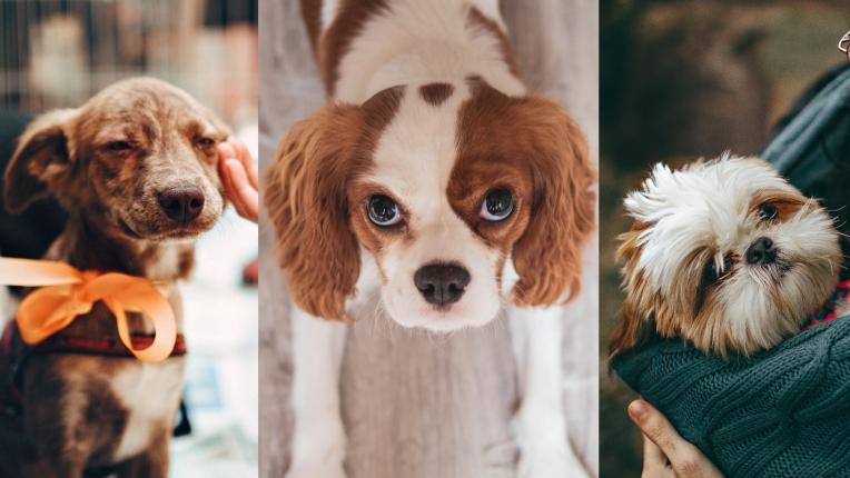 За кучетата с любов: 5 неочаквани ползи от домашните любимци