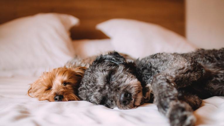 Ето как да се събуждате щастливи сутрин