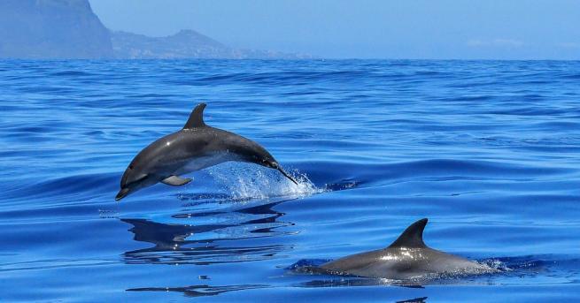 България Откриха мъртъв делфин на спирка във Варна Екоинспекцията в