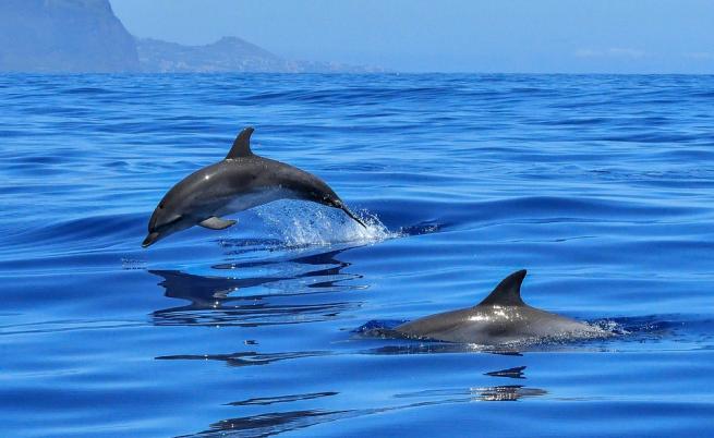Откриха мъртъв делфин на спирка във Варна