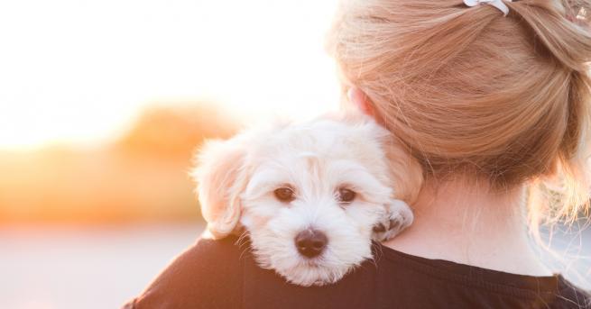 Кучетата подушват рака в 97 процента от случаите, твърдят американски