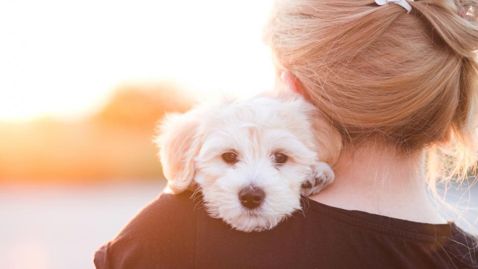 Кучетата могат да усетят заболяването рак