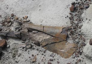 Намериха динозавърско гробище на 220 млн. години