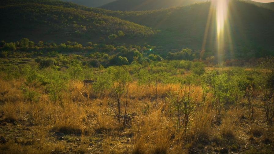 Пешеходно сафари в Южна Африка