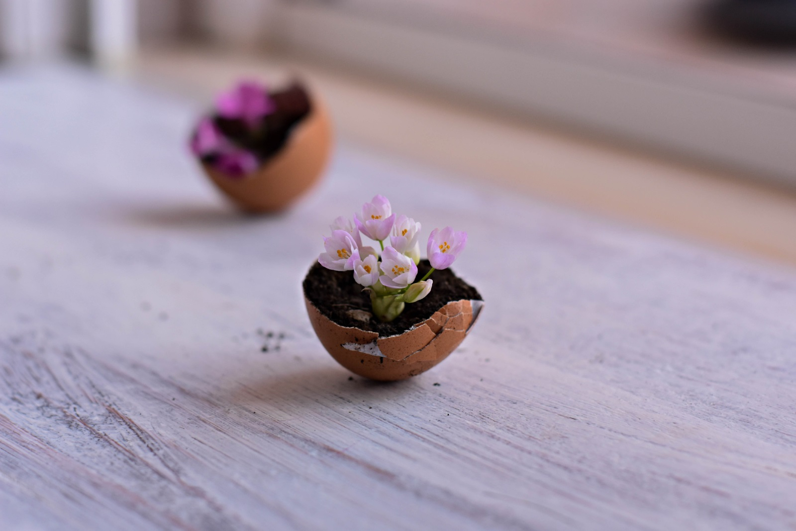 Саксийки от черупки<br /> Може да посадите в тях цветя, тревичка или ароматни подправки. Не забравяйте да направите няколко малки дупчици на дъното на черупката. Може да ги подредите отново в кора от яйца и да я украсите с слама, изкуствена трева или панделка.