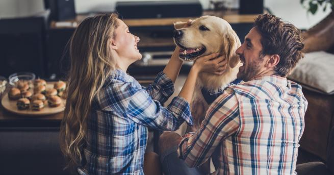 Домашните любимци често заемат голяма, ако не и основна част