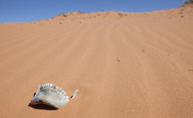 Останки разкриха изчезнал човешки вид