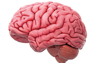 Проблемите с паметта идват не когато годинките напреднат, а когато мозъкът ни започне да старее