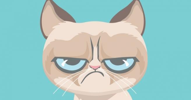 Grumpy Cat или Намръщеното коте, най-известната котка в интернет, която