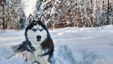 <p><strong>Вижте коя порода куче</strong> съответства на зодията ви</p>