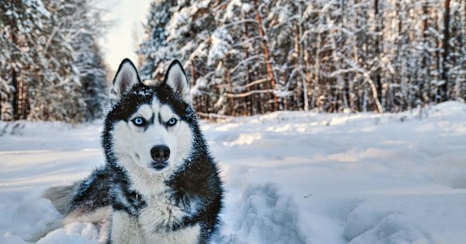 Любопитно Вижте коя порода куче съответства на зодията ви Кучетата,