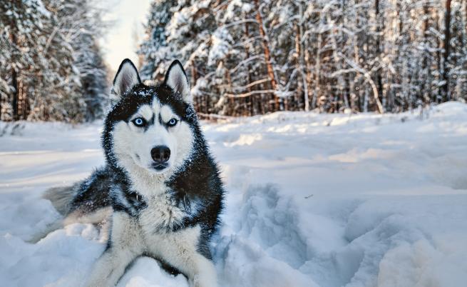 Вижте коя порода куче съответства на зодията ви
