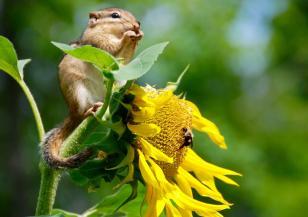 Днес е Международният ден на биологичното разнообразие