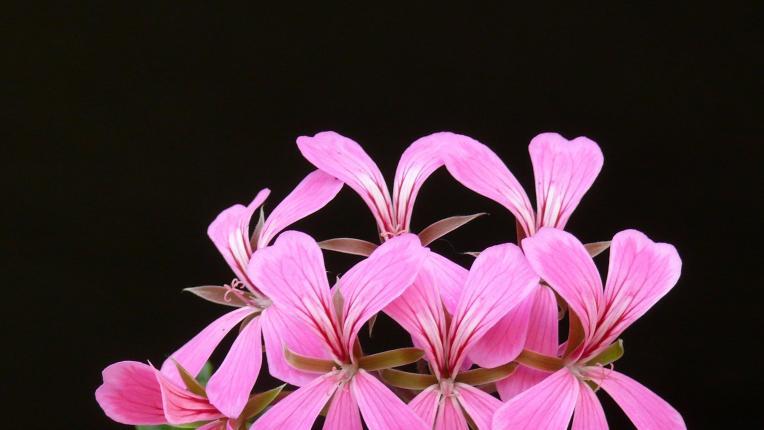 Растенията, които ще ви помогнат да се отървете от досадните комари