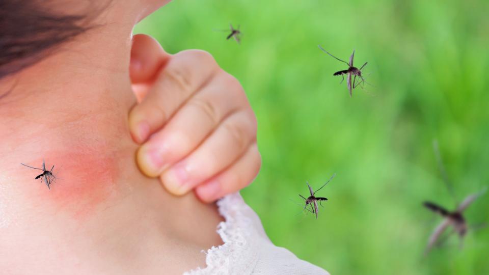 Опасна ли е западнонилската треска?