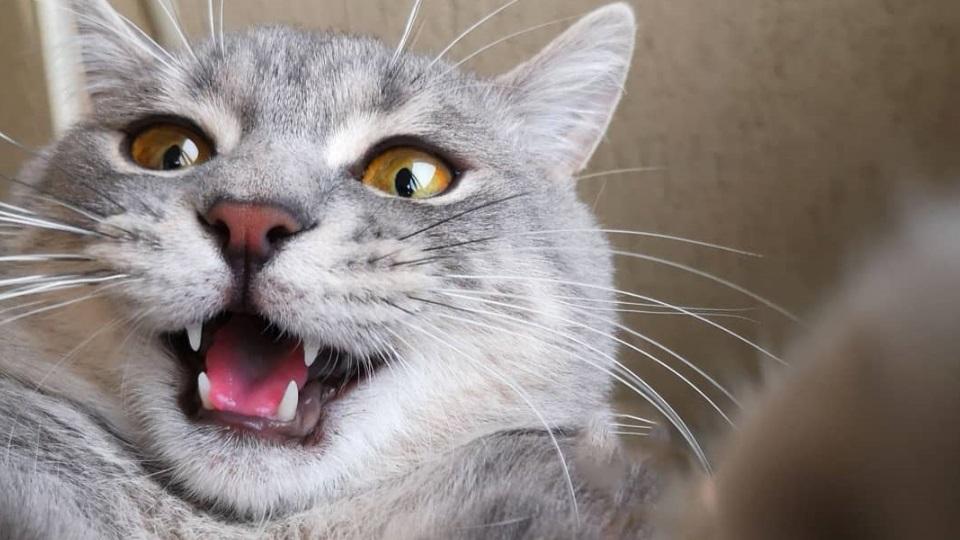 Котето Ранджи е първият Catfluencerbg