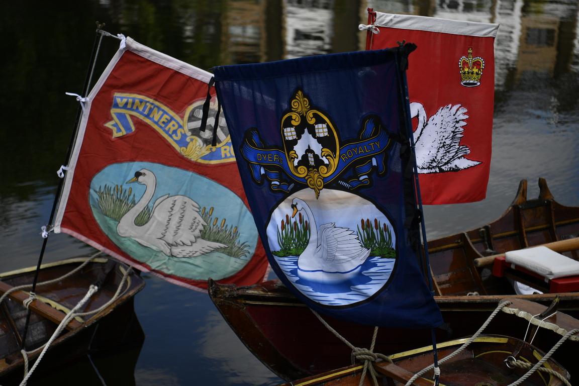 <p>Три седмици кралски броячи в яркочервени униформи ще пътуват с лодка по поречието на река Темза, за да разберат какъв е точният брой на пернатите птици.</p>