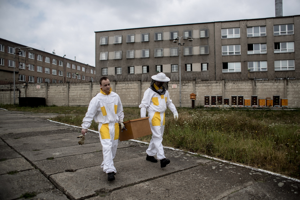 Медът, произведен в Херманице, не може да се продава, тъй като на затвора не се разрешава да извършва търговски дейности. Вместо това медът се дарява като подарък на други организации, а затворниците могат да дадат част от техния продукт на роднини.