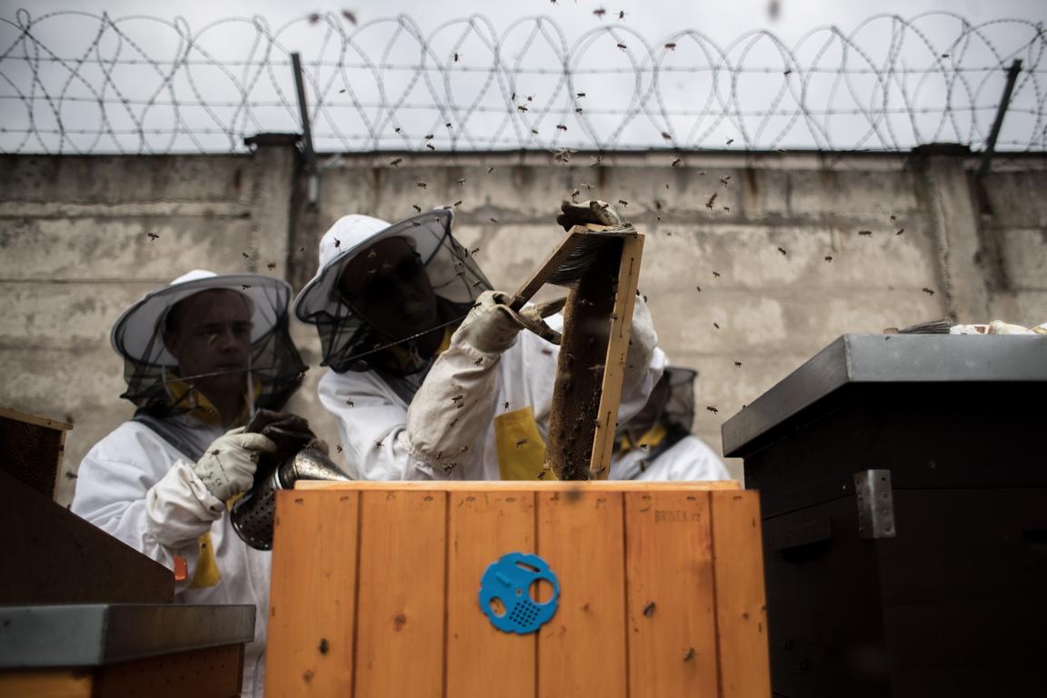 Херманице е един от няколкото затвори в Бохемия, които участват в програмата за пчеларство в затворите, инициатива на чешкото Министерство на правосъдието.