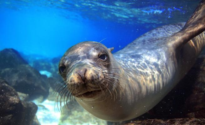 Рядка снимка на морски лъв стана хит в мрежата