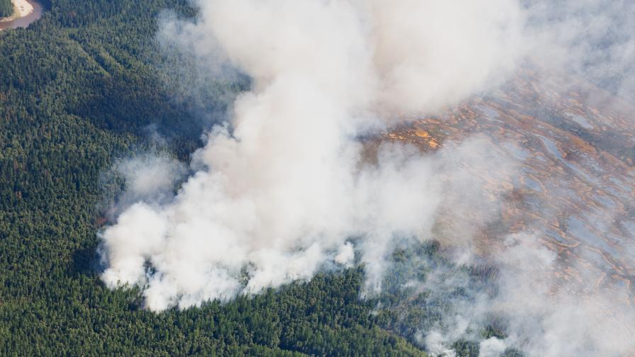 <p>Чудовищен пожар унищожава най-голямата гора на Земята</p>