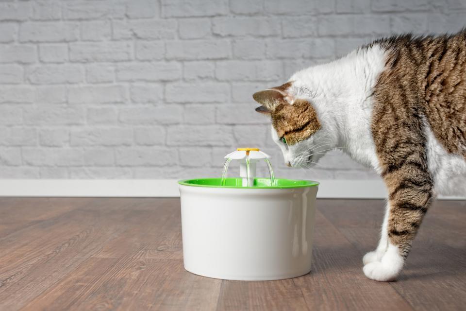 домашни любимци вода хидратация