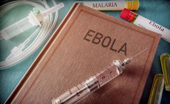 Могат ли кучетата да ни предпазят от болести като ебола?