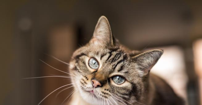 Снимка: Днес е международният ден на котката