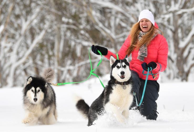 кучета сняг гонки