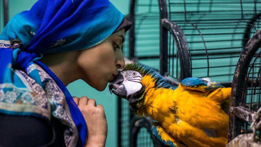 Академията за папагали