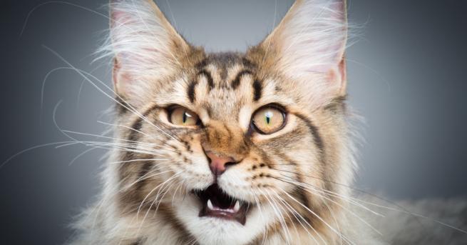 Снимка: Помощ - котката ми полудя!