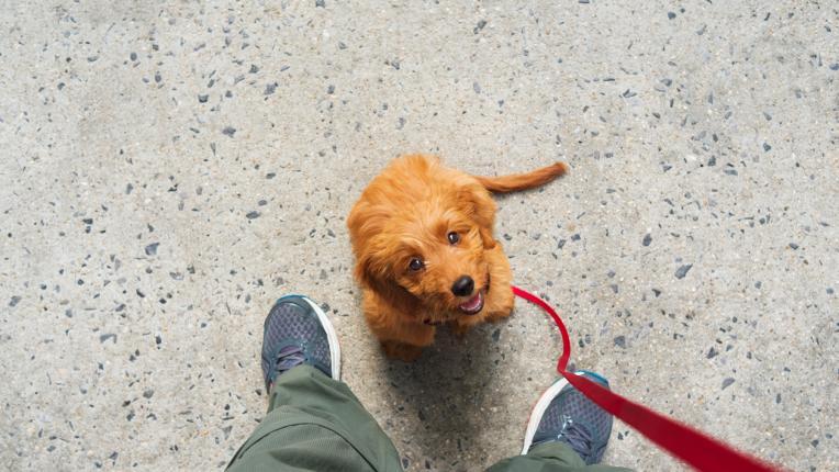 10 начина, по които кучетата изразяват любовта си