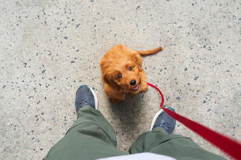 <h3>9. Когато ни наблюдават търпеливо как излизаме</h3>  <p>Ако кучето ви се чувства спокойно, когато излизате и ви чака търпеливо да се приберете, това е знак, че се доверява и знае, че няма да го изоставите. Но, ако се чувства тревожно и започва да скимти и лае всеки път, когато се приготвяте за излизане, има начини да направите раздялата малко по-поносима за любимеца. Погалете го по главата, дайте му лакомство и му говорете тихо и спокойно.</p>