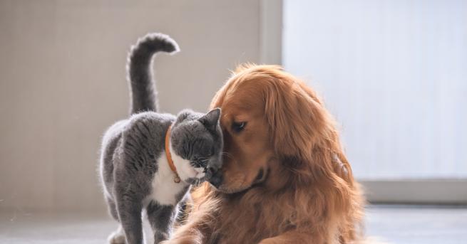 Като куче и котка - това определение често навява на