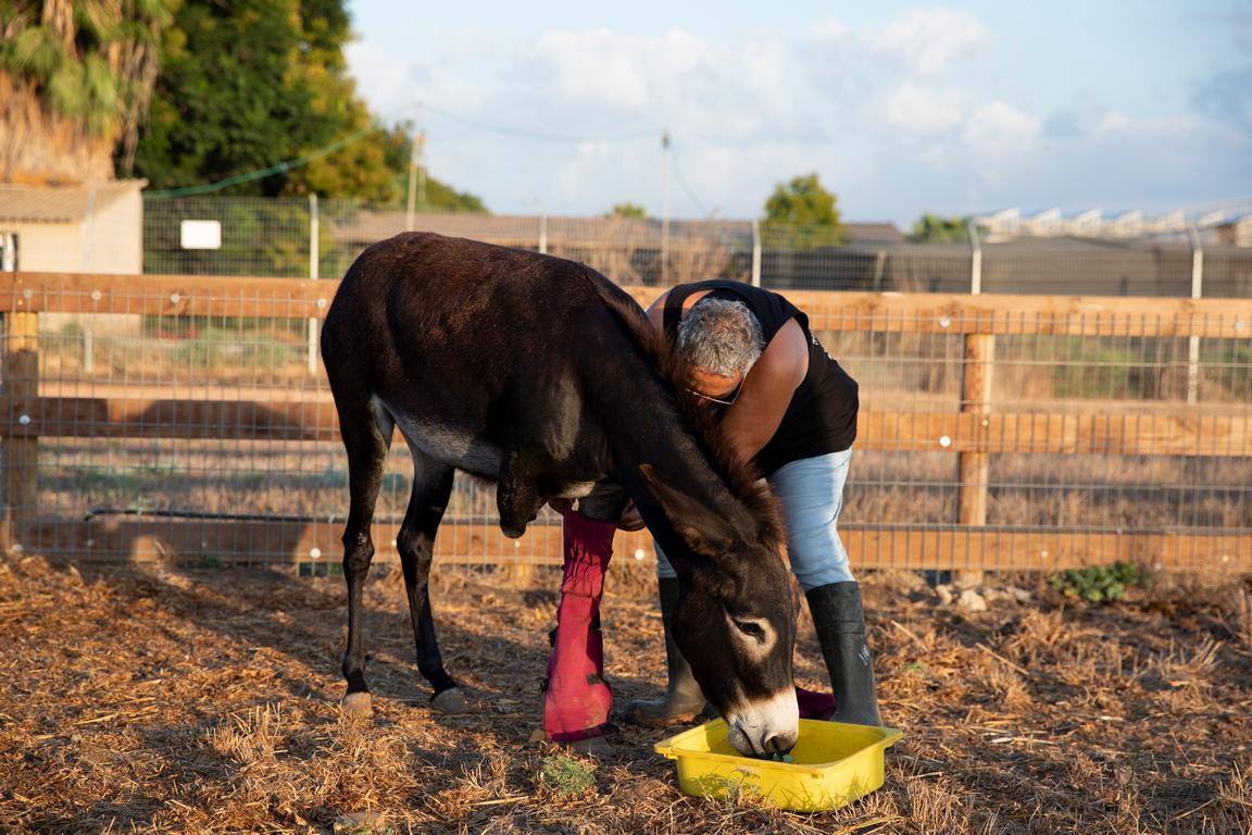 <p>Съоръжението работи от 2016 г. и приютява над 250 животни, като предлага лична грижа и лечение за всяко животно.</p>