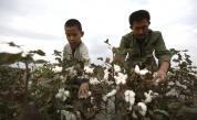 7 мита за модерното робство