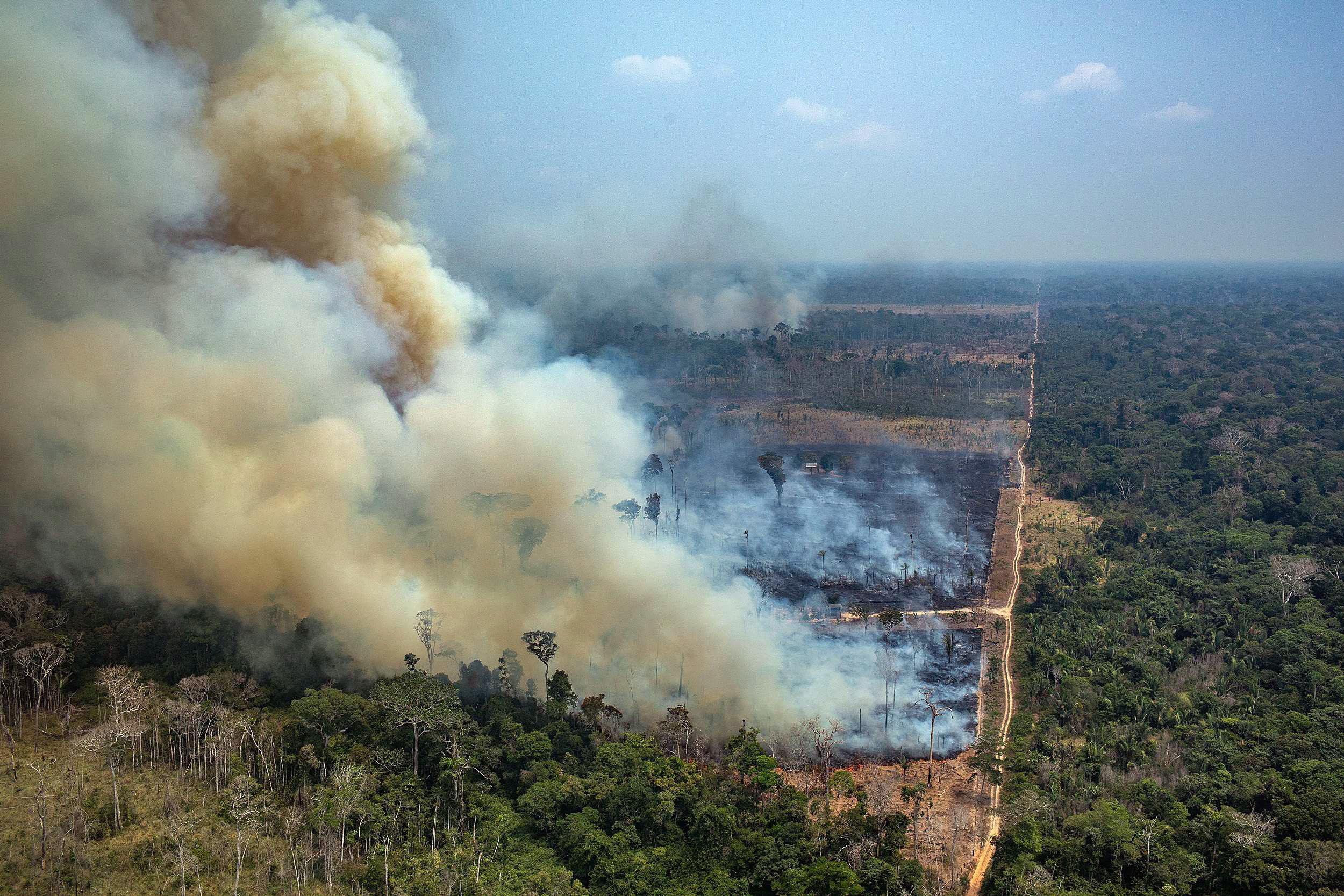 Никога преди в амазонската джунгла не са горели толкова много пожари. Броят им в момента е над 2500. Едва днес правителството на Бразилия заповяда на армията да се включи в гасенето на огъня.