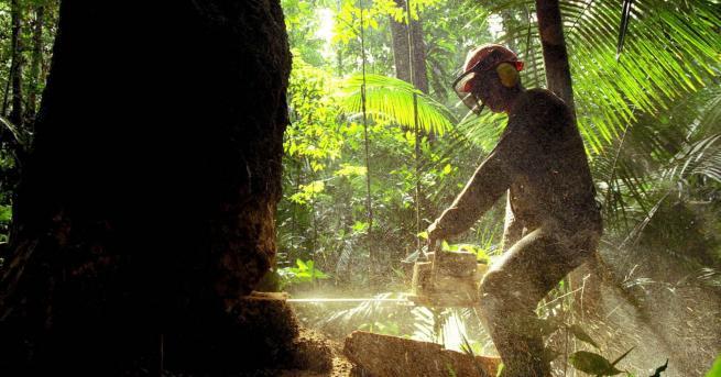 """Снимка: Кой сече гори в Амазония за да """"оцелее"""""""