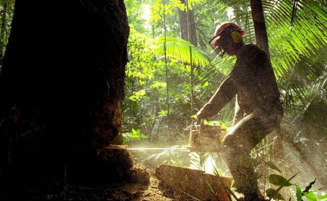 """Кой сече гори в Амазония за да """"оцелее"""""""